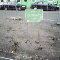 Asphalt + Zaun = Pflanzenfläche?